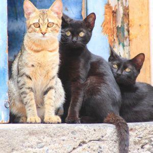 cat-1231064_1920