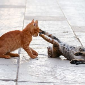 cat-4399153_1920