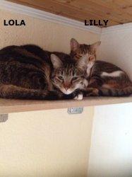lola+lilly4