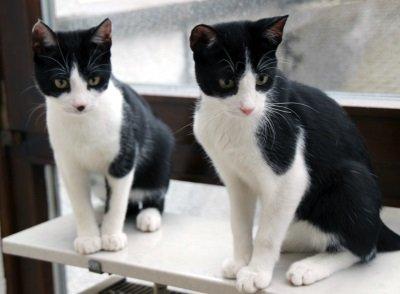 Max und Moritz1